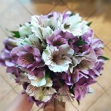 Alstromeria are free flower...