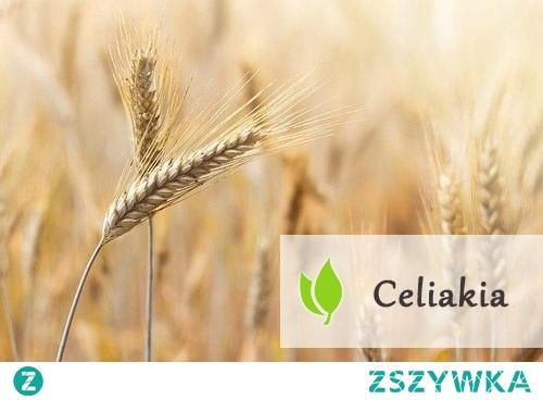 Celiakia - nadwrażliwość na gluten