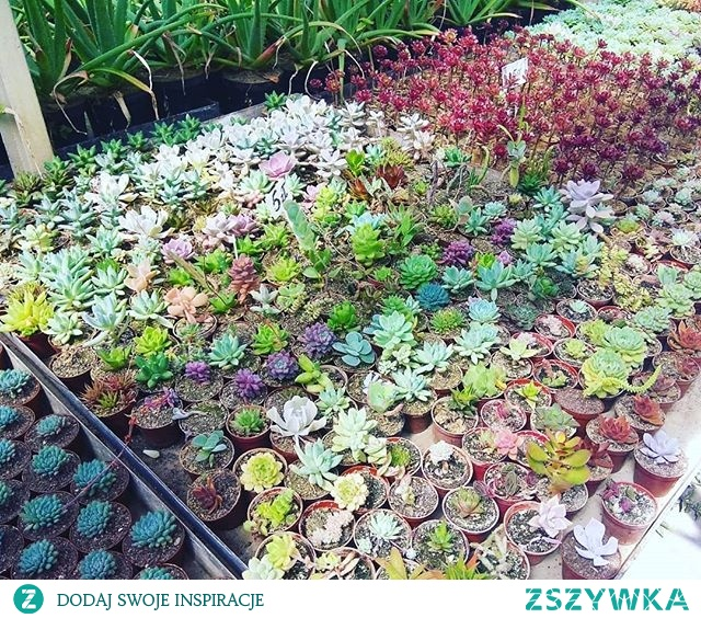 So perfect place for succulents lovers
