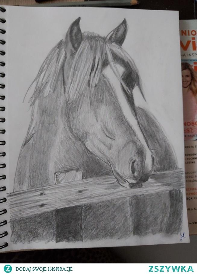 ... Szkic konia