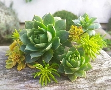 #succulents #gardeninsporat...