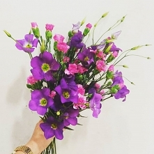 EUSTOMA  #bouquet #bouquets...