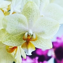 #orchidlovers #orchid #orch...