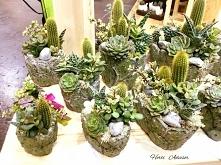 Sukulenty - piękne rośliny o niewielkich wymaganiach. Jeśli chcesz dowiedzieć się więcej o ich uprawie oraz wykorzystaniu zapraszam do odwiedzenia bloga którego prowadzę @hortia...
