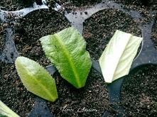 Roznażanie roślin doniczkow...