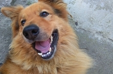 Śmiech psa