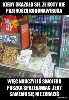 Koty nie przenoszą koronawi...