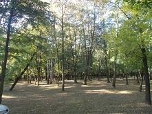 Park przy pałacu w Kłobucku...