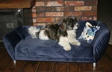 Minisofa Vittoria legowisko dla psa, kota. Elegancka kanapa, sofa dla Twojego Pupila. Przeznaczone dla małych i średnich psów.Vittoria to komfortowe legowisko dla psa – najlepsz...