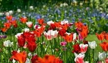 Wiosna to czas, gdy wszystk...