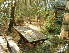 W wiosenne popołudnia, nie chcąc tracić czasu na siedzenie w domu, uciekam do swojego leśnego, bajkowego zakątku. Znajduję się tuż za moim domem więc nie mam daleko :) Oddycham ...