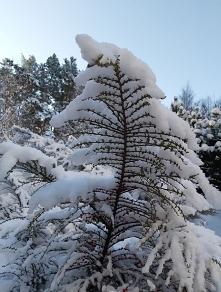 Zdjęcie z Polski, zima wios...
