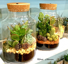 THE GARDEN IN A JAR ❗️ First, some history