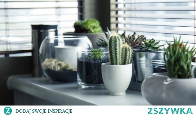 Jakie rośliny warto mieć w sypialni?
