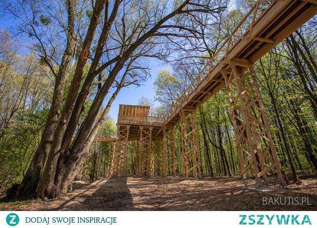 W Poznaniu została właśnie otwarta unikalna atrakcja – ścieżka w koronach drzew. Wszyscy chętni mogą się nią przejść w lesie, nad strumykiem Szklarka, w pobliżu poznańskiego Nowego Zoo.