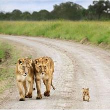 family ❣