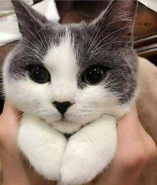 Koci, koci łapki