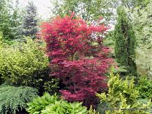 Drzewa i krzewy o czerwonyc...