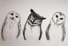 #Owls  Szkic ołówkiem  *8B-2H 297-210 80g