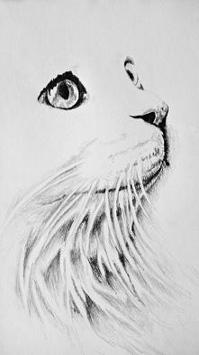 #cat's look  Szkic ołówkiem  *8B-2H 297-210 80g