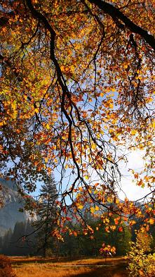 Im miss you ~Autumn