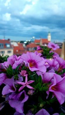 moje kwiaty