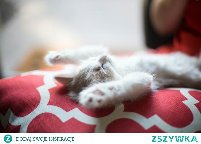 Przyjrzyj się, jak dziecko lub zwierzę śpią, a zobaczysz, że ich brzuch, a nie klatka piersiowa, porusza się w górę i w dół. To głębokie oddychanie z przepony jest sposobem, w jaki faktycznie powinnyśmy oddychać, ale niewielu z nas to robi.