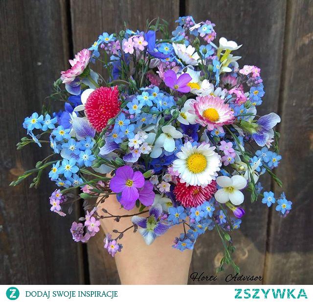 #flower #flowermania #flowering #flowerslovers #flowerinfluencer #flowers #kwiaty #gardening #garden #gardeninspiration #forgetmenot #daisy #bouquet #bouquetofflowers #florist #floristic #kwiaciarz #ogrodnik #hortiadvisor #blueflowers #spring #wiosna #gardener #horticulture #inspiration #flowerlover #blooming #rusticwedding #rusticstyle #naturelover