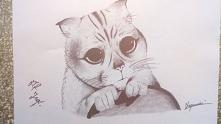 Rysunek narysowany na zamówienie przez moją znajomą, kot z bajki Shrek ^^
