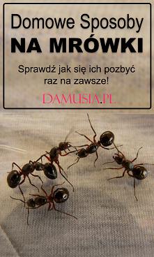 Domowe Sposoby na Mrówki – ...