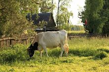 polskie wiejskie lato na Po...