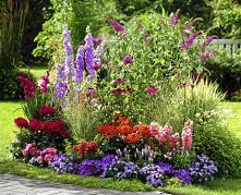... #ogród #rabata