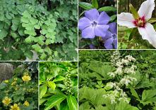 cienisty ogród