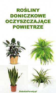Rośliny Doniczkowe Oczyszcz...