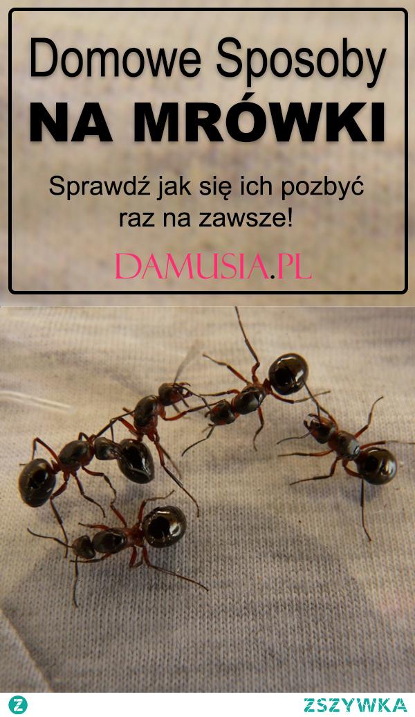 Domowe Sposoby na Mrówki – Sprawdź jak się ich pozbyć raz na zawsze!