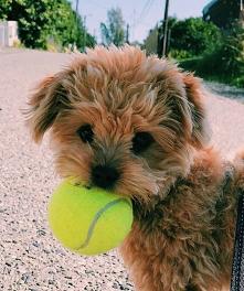 #pobawsiezemna #pies