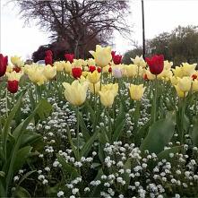 #rabata #ogrod #kwiaty
