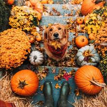 #pies #jesień