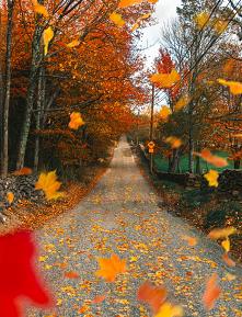 #fall #jesień