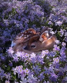 #bambi #sarenka