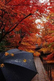 #rain #cold #autumn