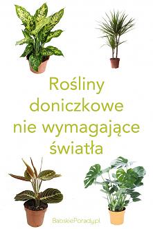 10 roślin doniczkowych, któ...