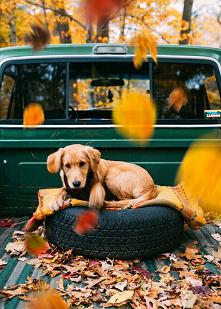 #dog #jesień2020