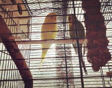 #papug#papuszka#