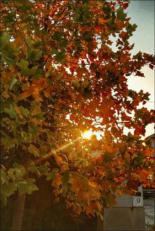 #kolorowo #jesiennie