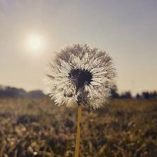 #dmuchawce#latawce#wiatr#