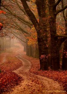 #złota #jesień