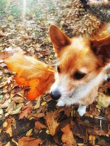 #sweet# #dog# # autumn# Jesień Ci niosę