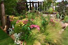 Ogrod w stylu preriowym