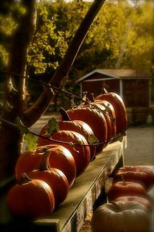 #dynia #jesień